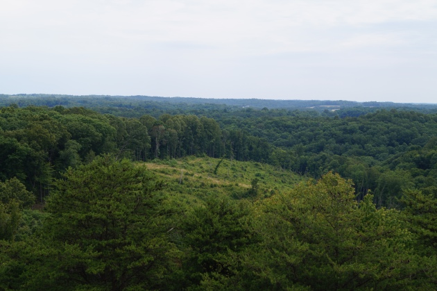 View from top of Ash Cave fire tower