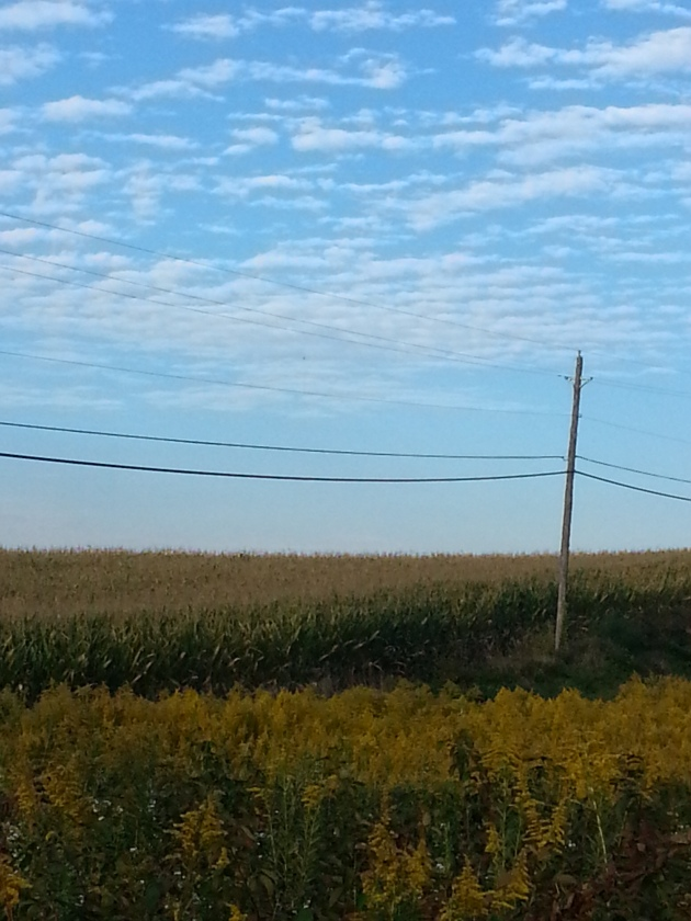 Blue sky over a corn field