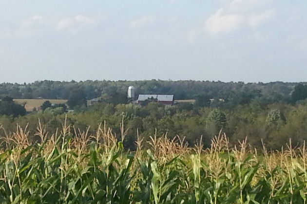 Corn field with an old barn in the background