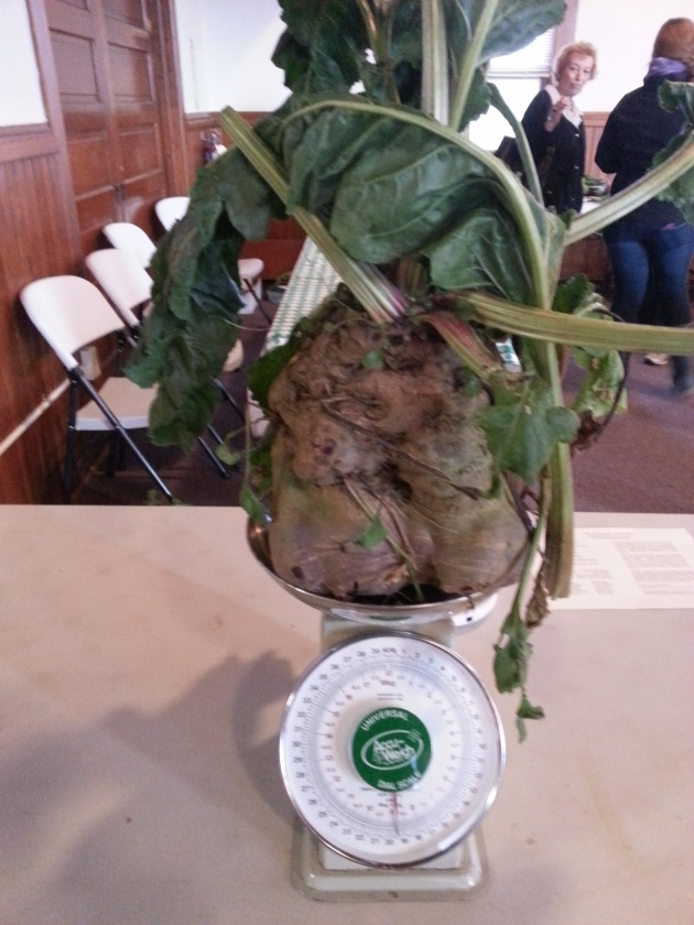 Winner of Largest Beet at the Kidron Beet Festival