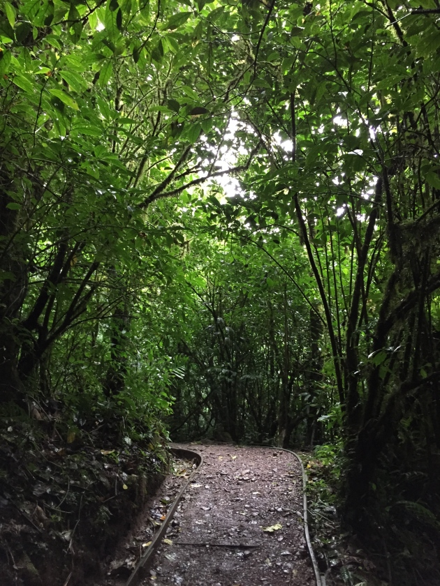Trail in Monteverde