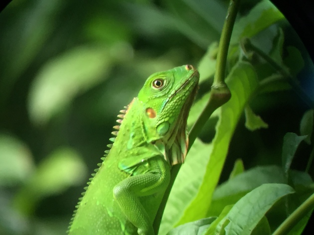 Bright green lizard