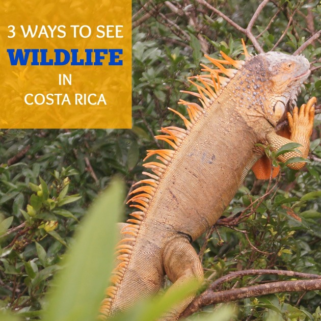 3 ways to see wildlife in Costa Rica
