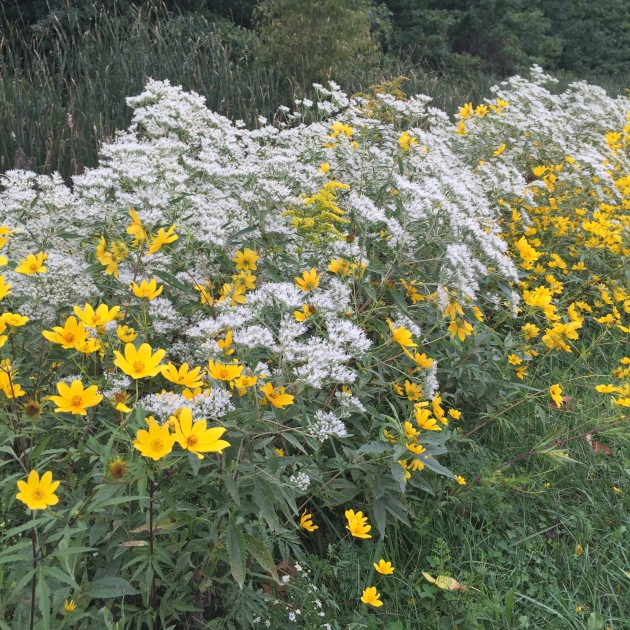 Yellow and white wild flowers